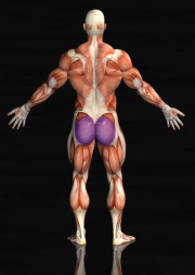 glutes muscles